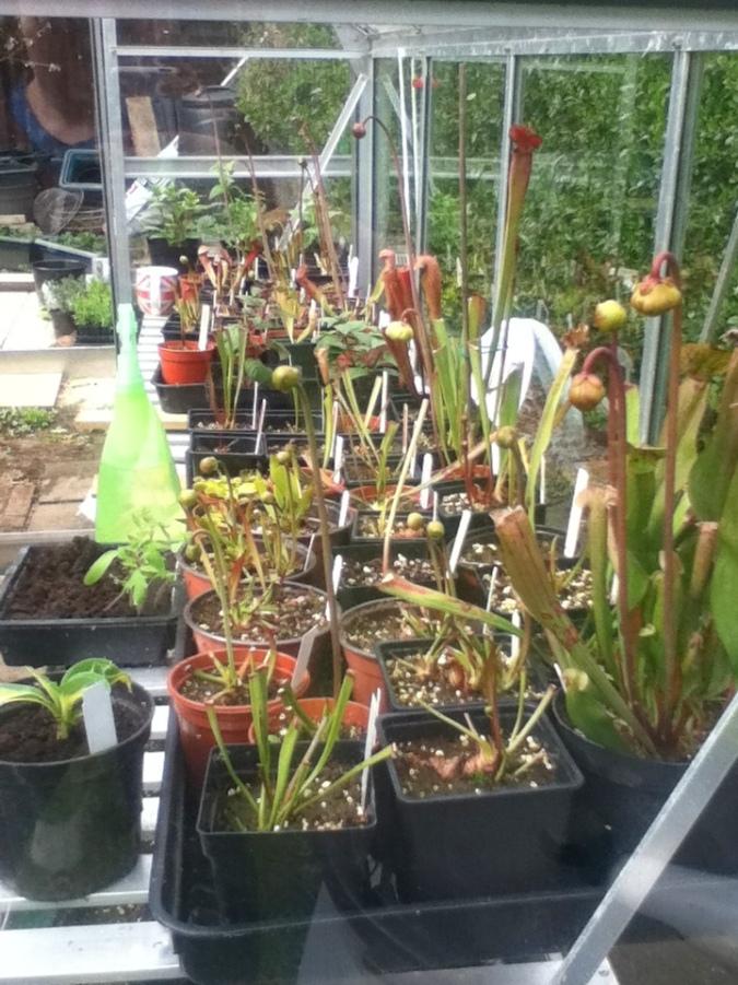 Plants growing away, flower seedlings comming up.