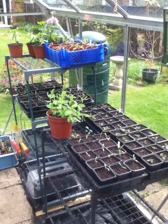 Seedlings in full swing.