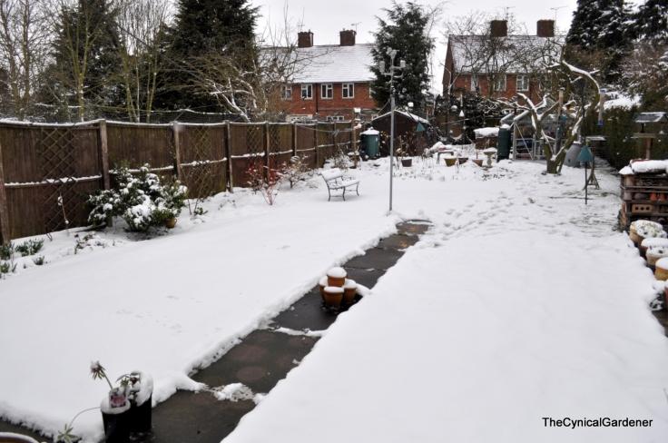 Snow Sunday 002