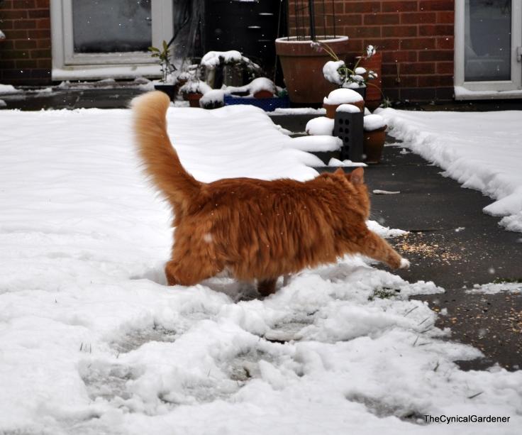 Snow Sunday 032