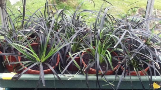 13 new pots of plants.