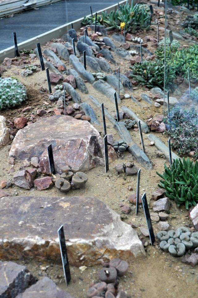 Living Stones.