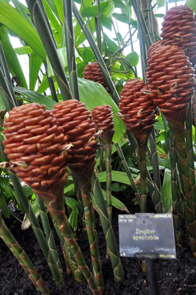 Amazing Plants.