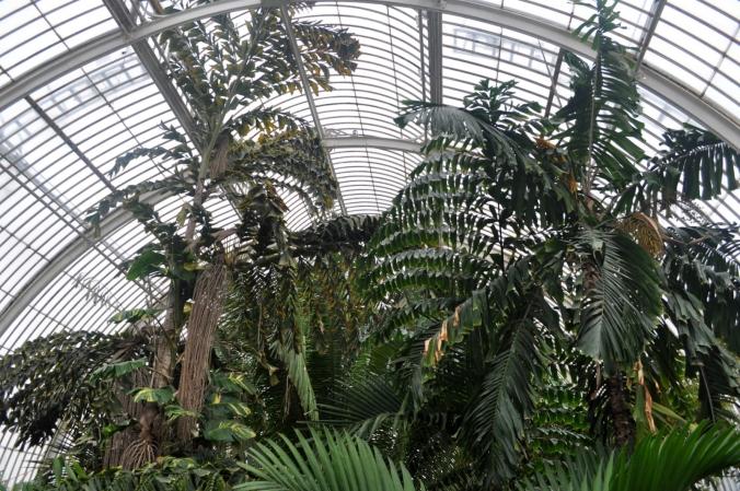 Huge plants