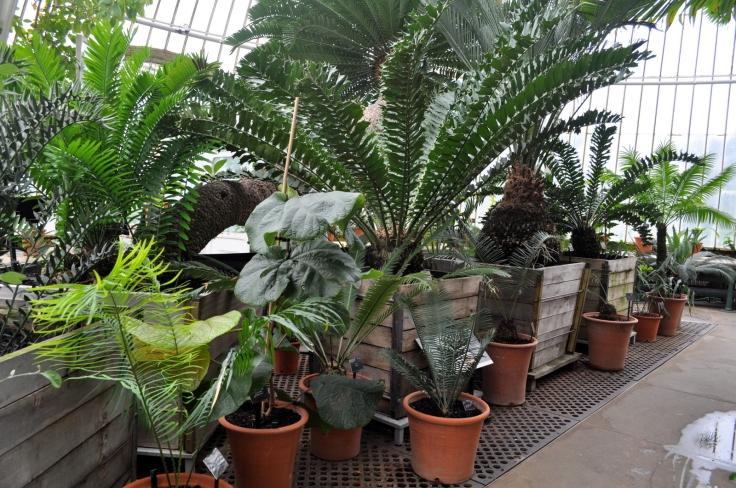 Kew 11.4.13 213