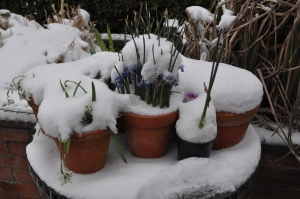 The Run up to Spring was a challenge..!