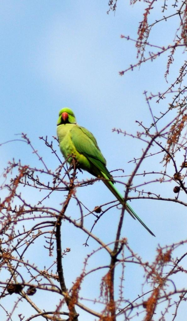 Parrots.!