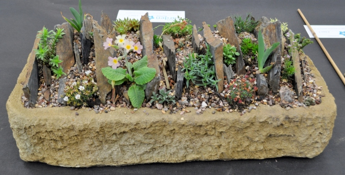 Alpine Trough Display