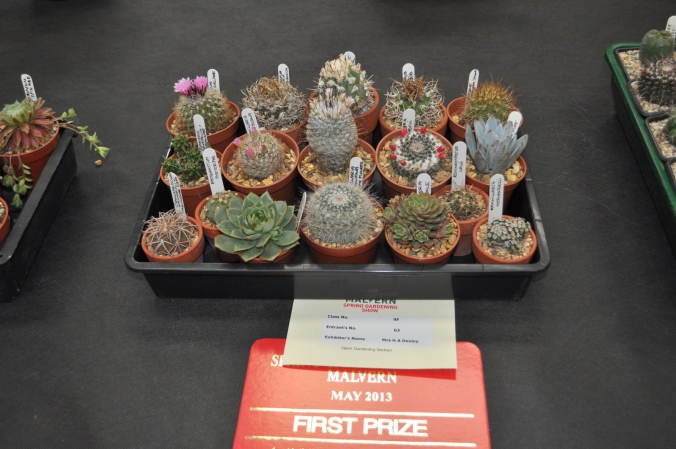 Collection of cacti in a tray.