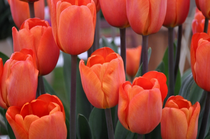 Orange is my favourite colour for flowers.