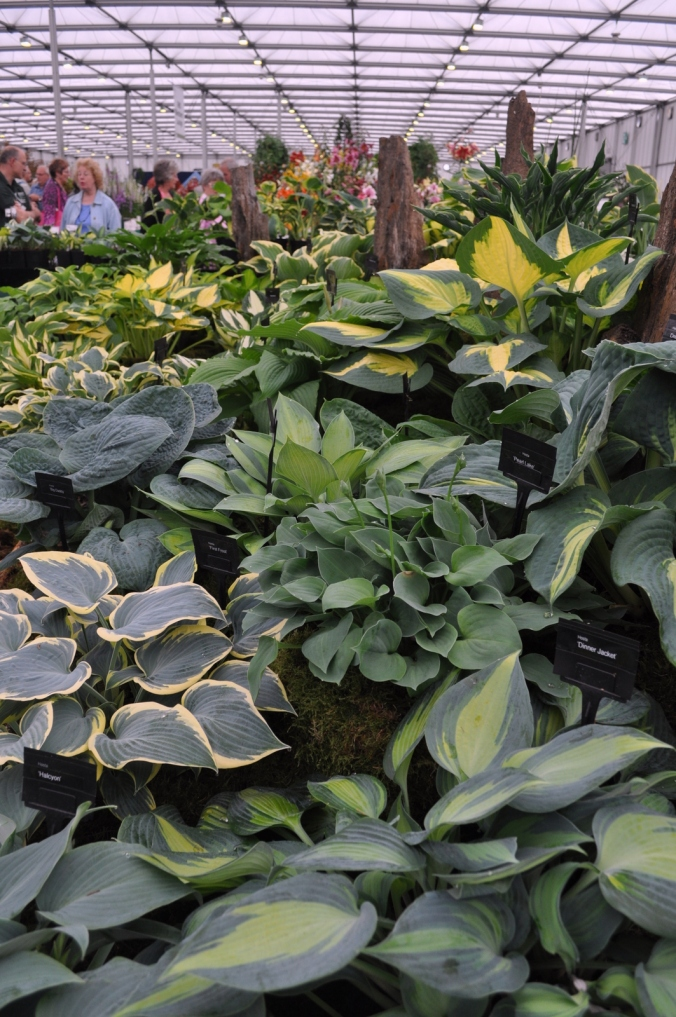Hostas Galore.