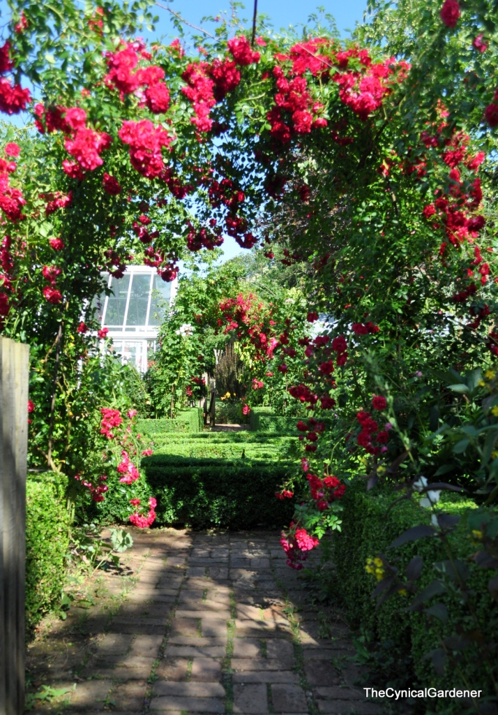 A wonderful archway of scented roses.