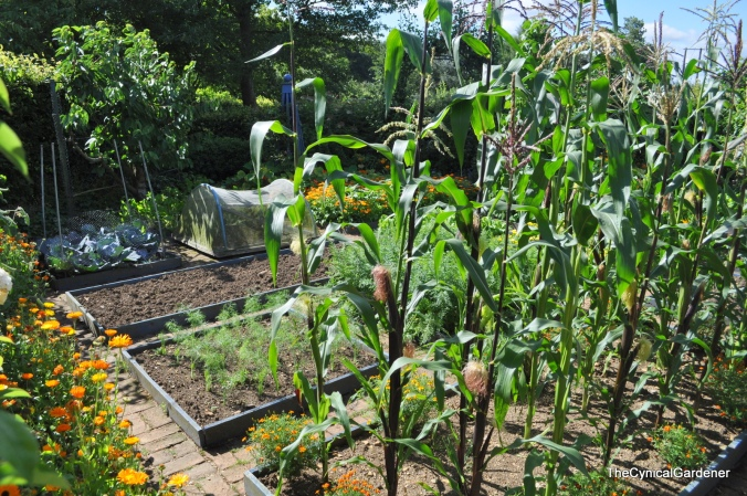 The Ornamental Kitchen Garden.