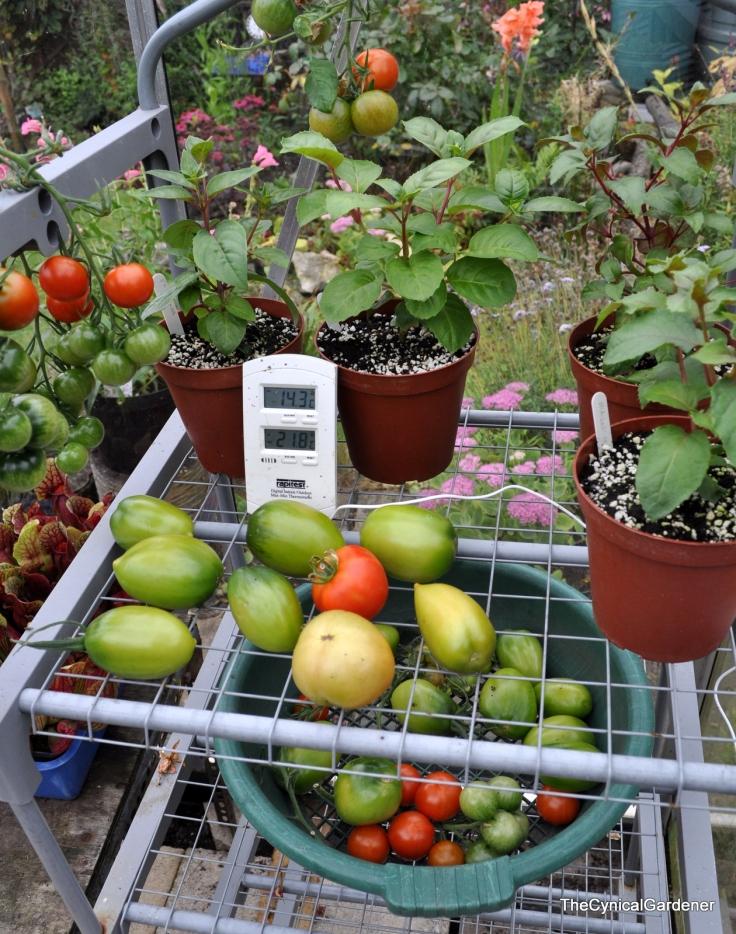 Harvest & Fuchsias
