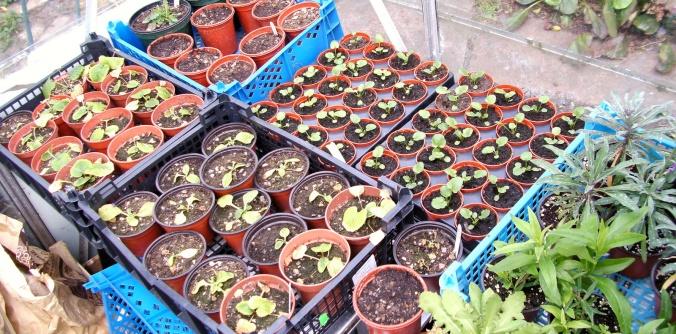 Baby Plants.