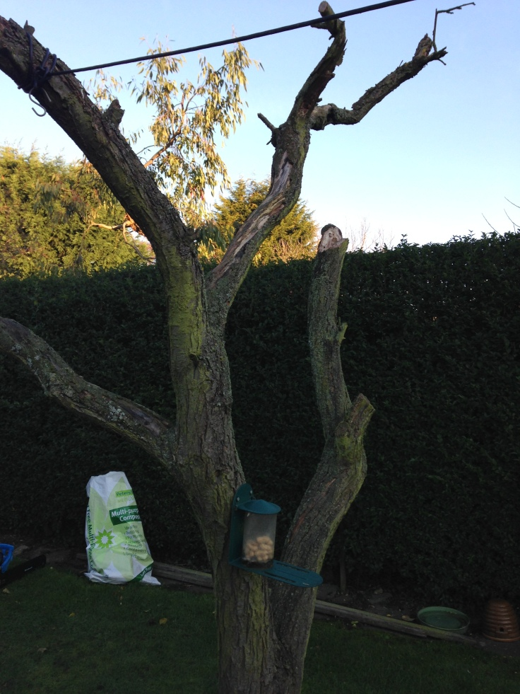 Tree before chainsaw...