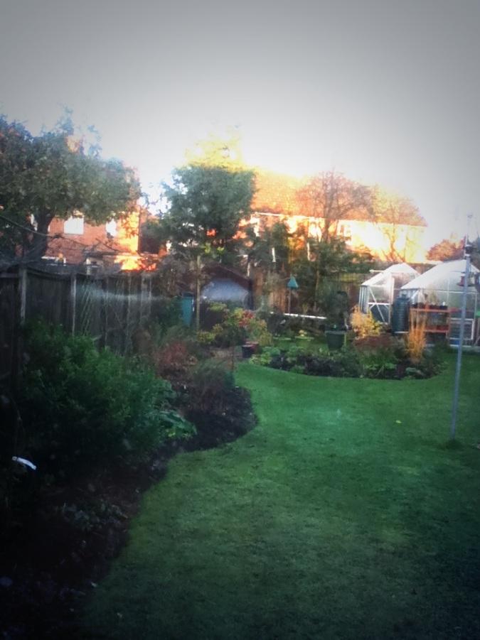Wet Garden.