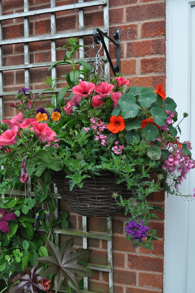 Hanging Basket, 1 of 7.!