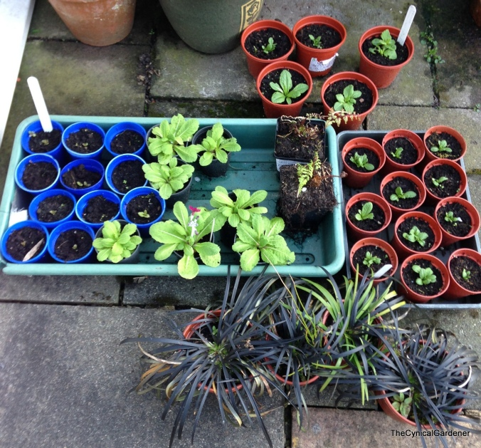 Plants in pots waiting to be planted...