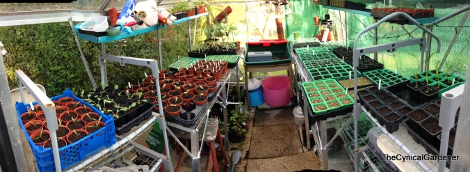 A rather fancy Panoramic view of my 6x8 Greenhouse.