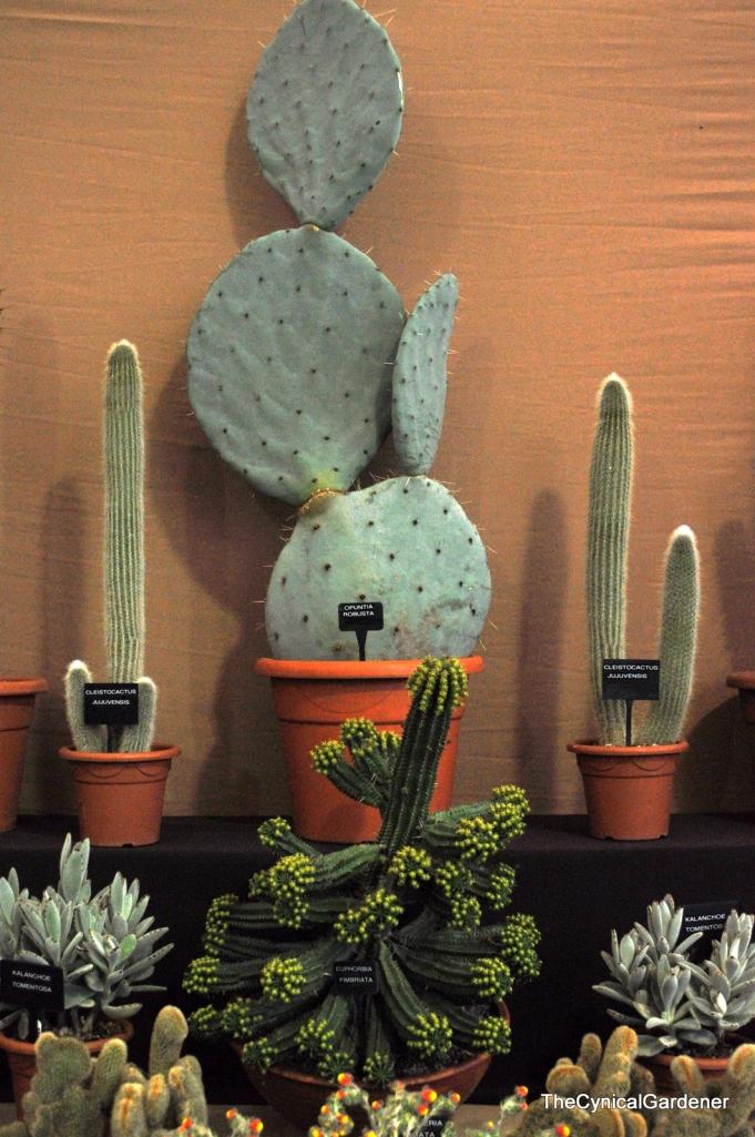 Beautiful Big Cacti