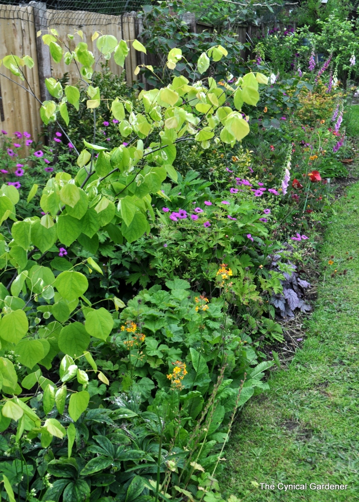 Fence border looking lush and somewhat full.