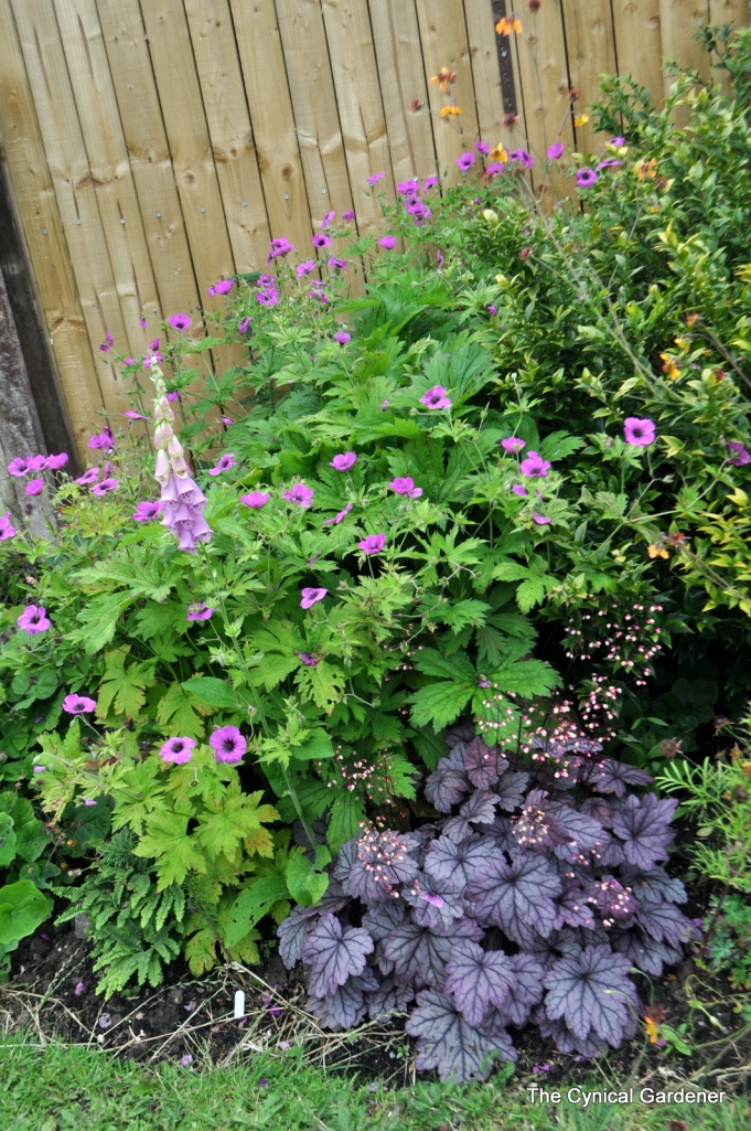 A nice arrangement here of Hardy Geranium & Heuchera.