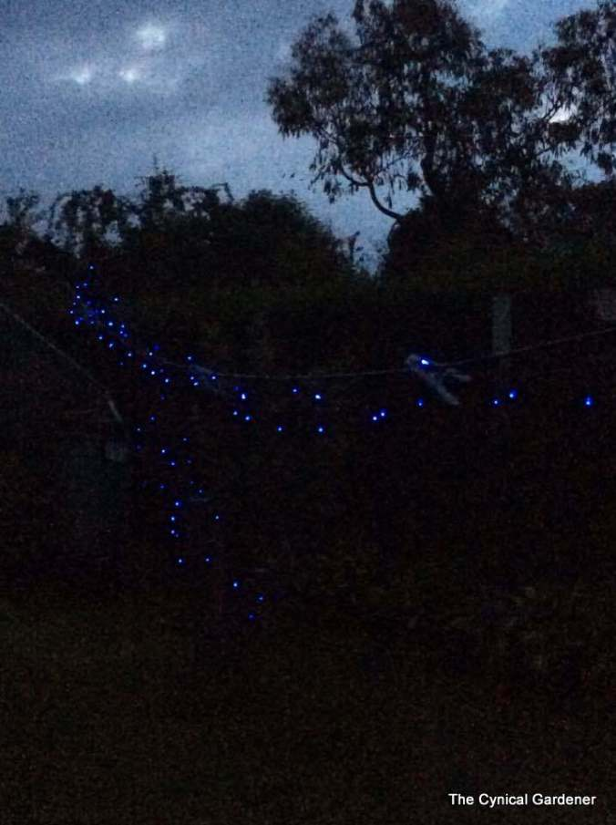 Blue LED Solar Fairy Lights.