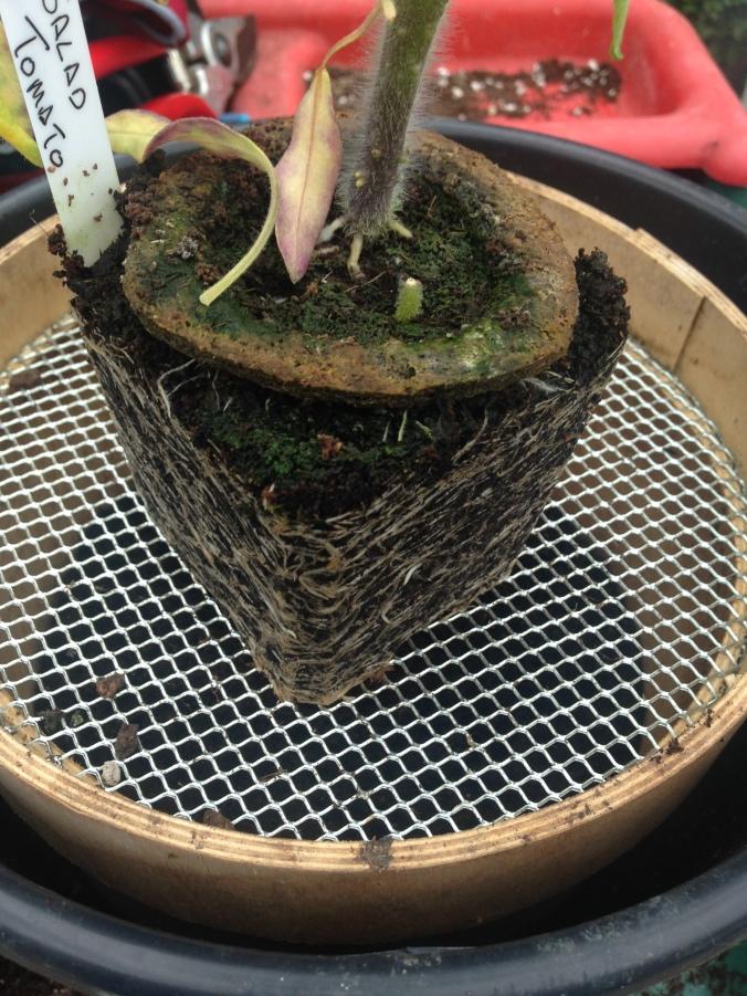 Grow-pot root ball.