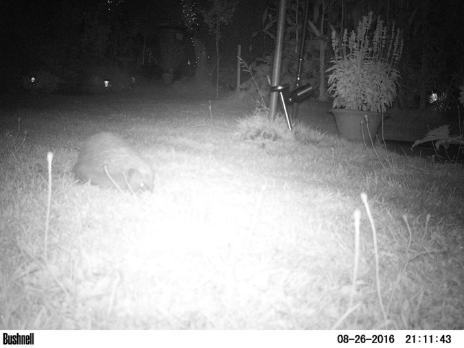 Hedgehog action.!