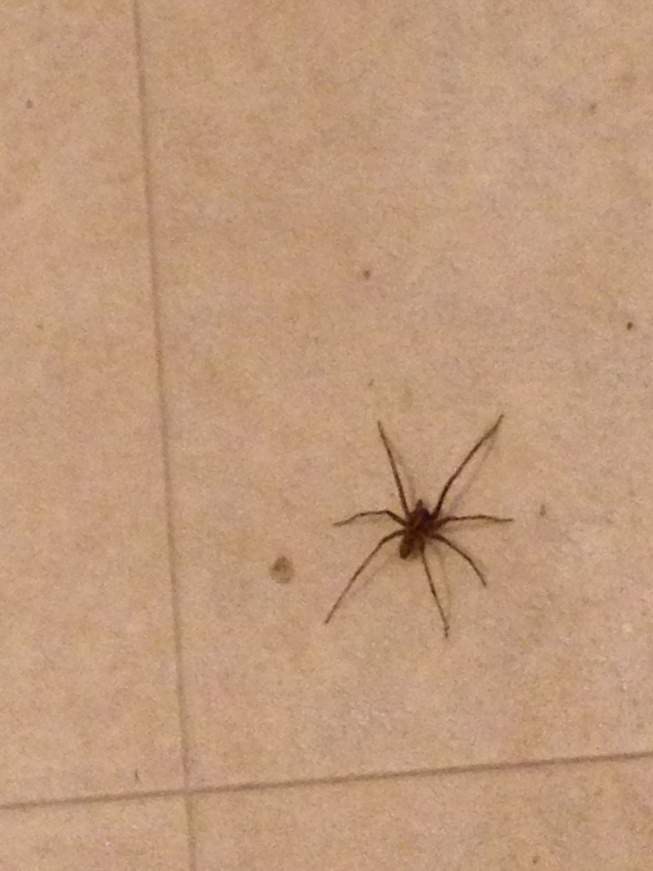 Bathroom Spider.