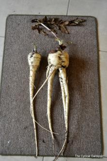 Kinky Roots
