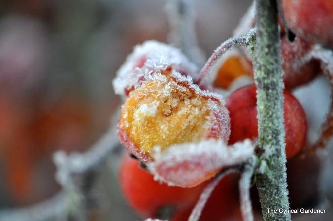 Burst Fruits