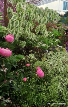 Gorgeous display by Morton Nurseries