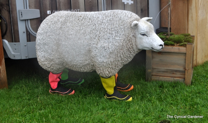 Sheep in Wellies