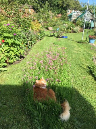 Bit of unmown lawn, flowers & weird furry fruit.