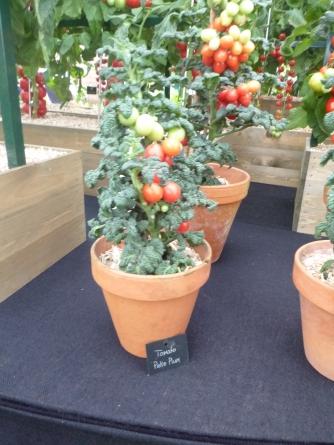 Tomato Patio Plum