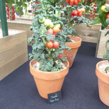 Tomato Patio Plum