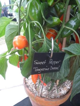 Sweet Pepper Tangerine Dream