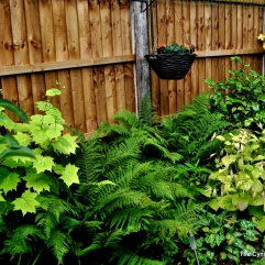 Ferns doing well