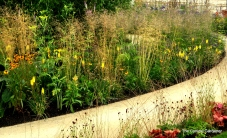 The hoggin spiral paths draw the visitor into the garden. The vibrant outer planting in russet and red slowly changes to ochres and yellows before softening to mauves and blues; all the time the planting heightens to increase the sense of enclosure and protection