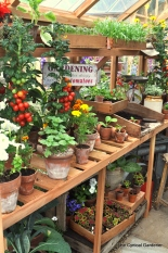 Lovely Potting bench, not a slug in sight.