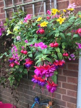 Hanging Basket. One of many.