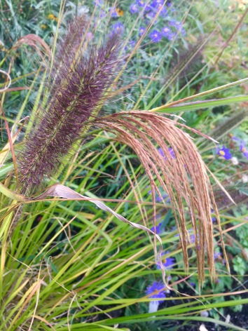 Grassy Seed Heads together