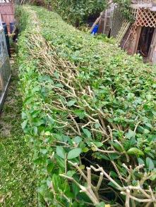 Stihl Cordless Hedge cutter