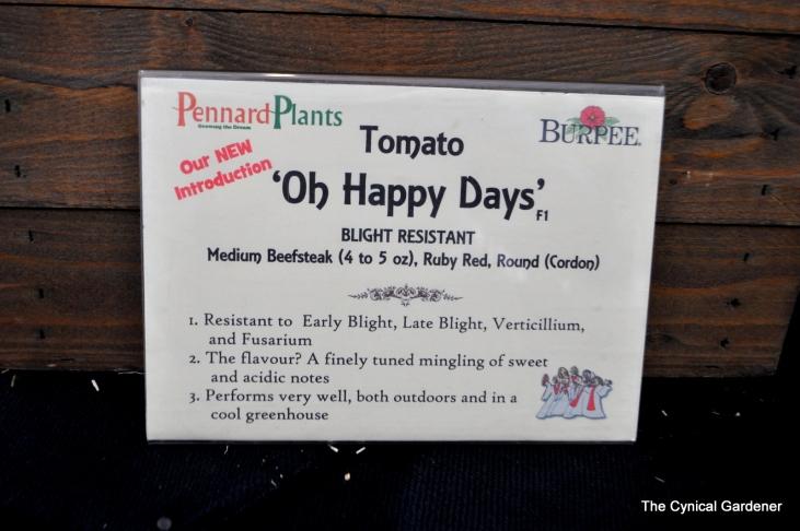 Oh Happy Day Tomato Info