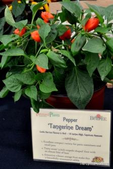 Pepper Tangerine Dream
