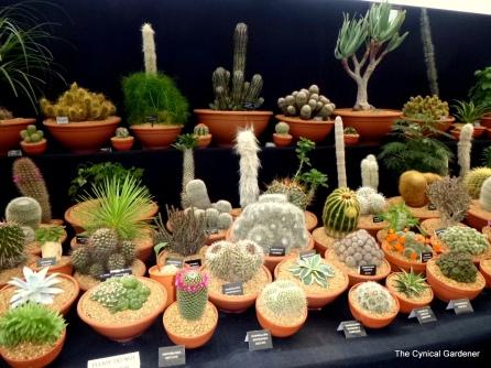 Cacti display