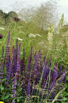 Deschampsia cespitosa 'Garnet Schist' and Salvia nemerosa 'Caradonna'