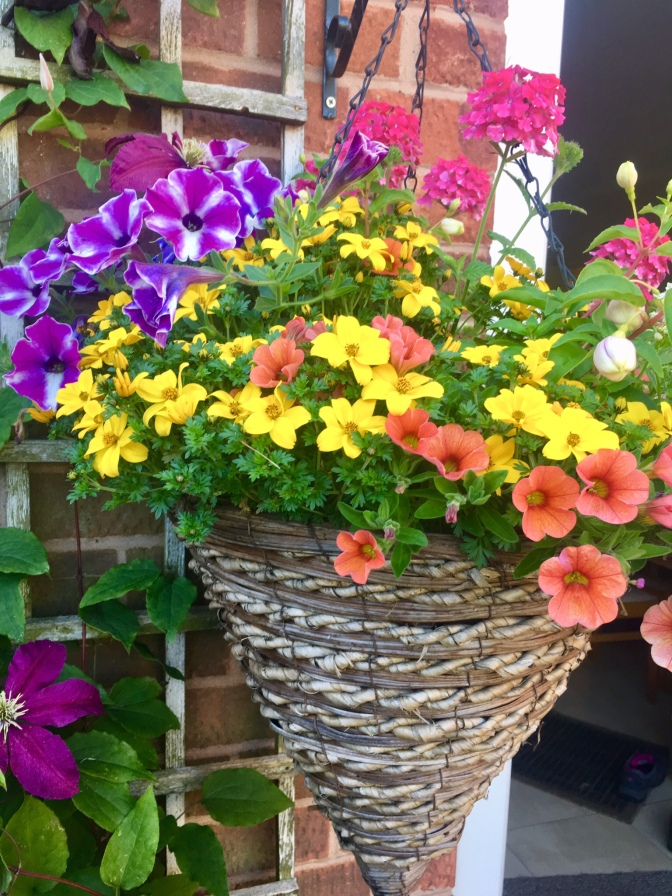 One of several Hanging Baskets
